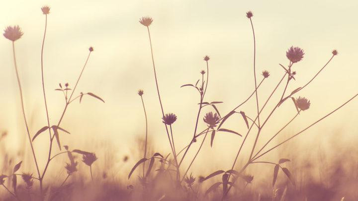fleurs-sepia-champs-pompes-funebres