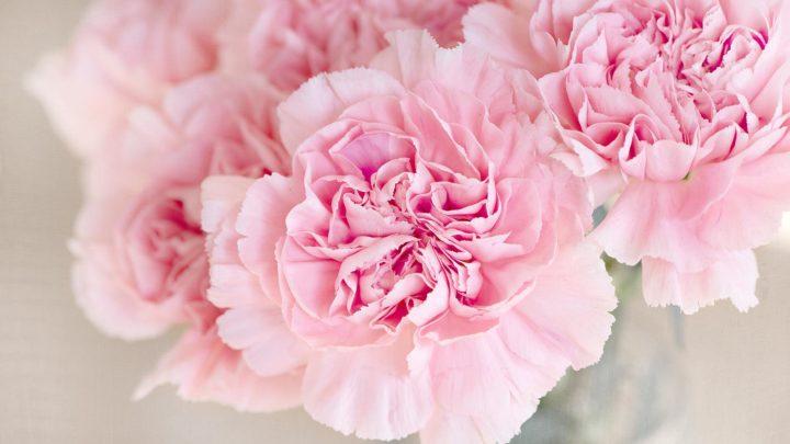 ranche-loudun-pompes-funebres-roses